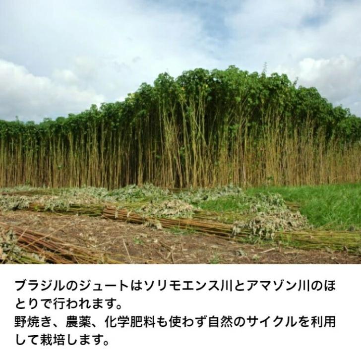 ジュートの栽培の様子
